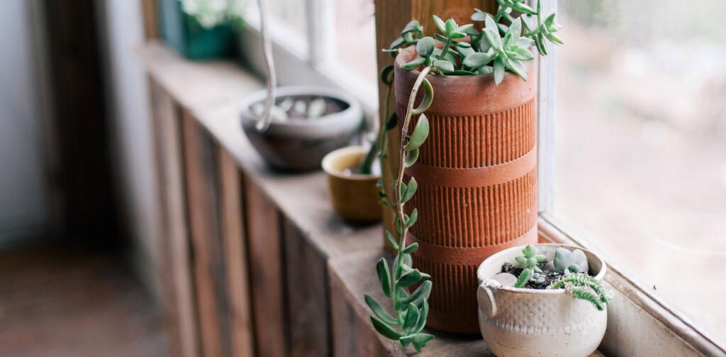Gesundes Grün Drei Zimmerpflanzen Für Besseres Raumklima Withings