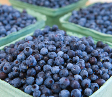 Organic Wild Maine Blueberries grown and packed by Hatch Knoll Farm, Jonesboro, Maine, USA