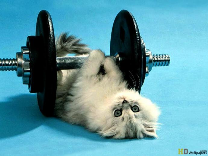 Funny-Cute-Cat-Fitness-690x517