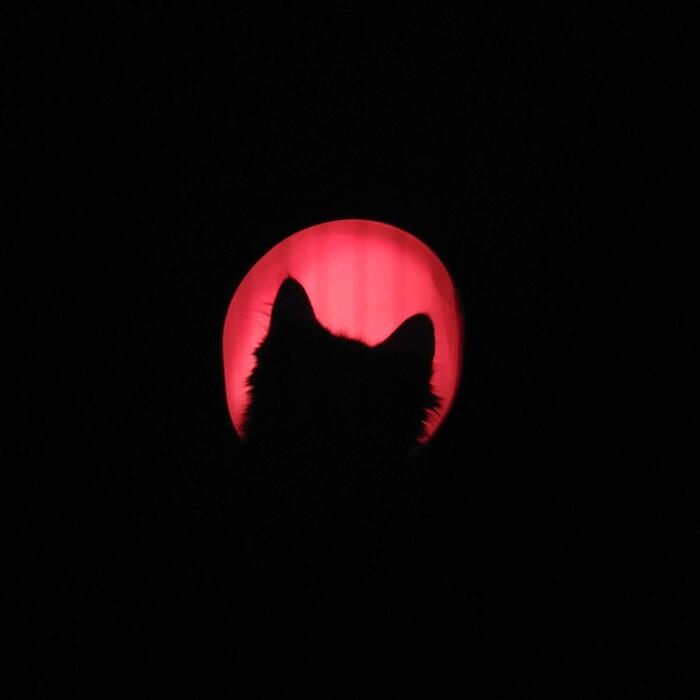 Aura_cat